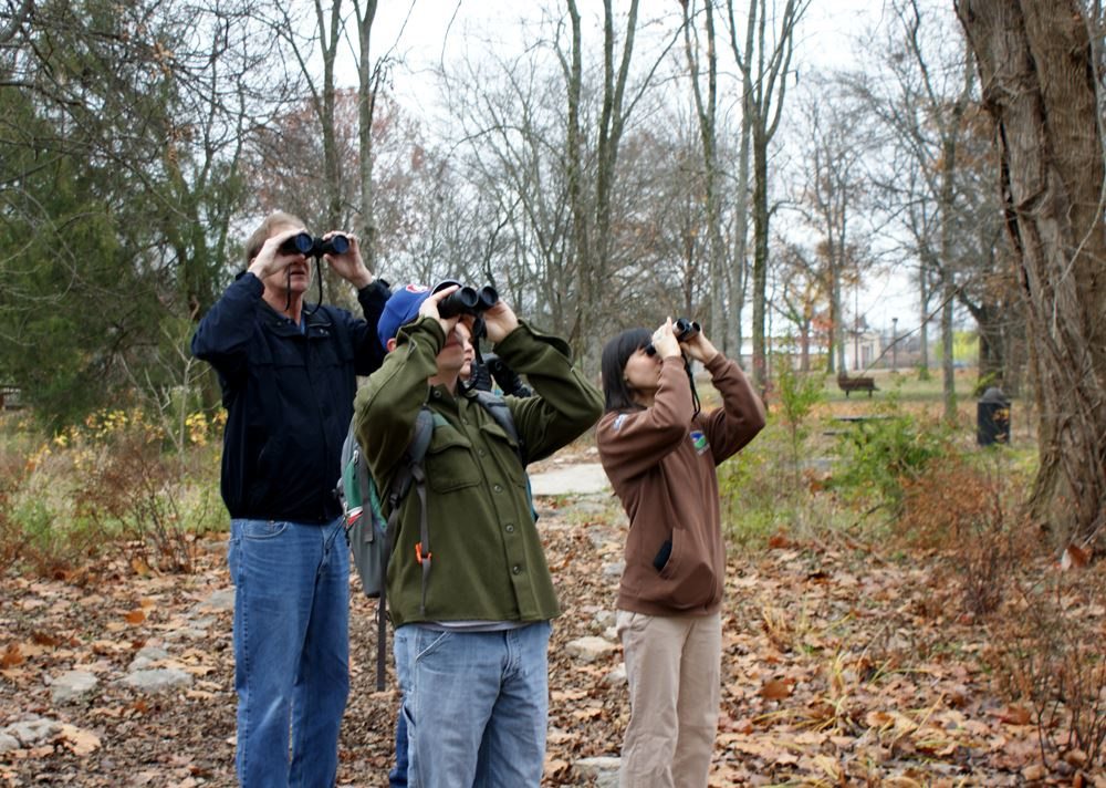Group of adults looking up into trees through binoculars. Autumn